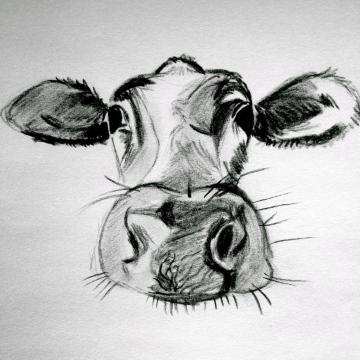 zei de koe